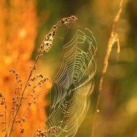 Золотая паутина :: Леся Вишня