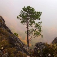 Жизнь есть и на камнях) :: Olga Vorzheva
