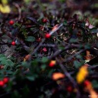 Осень :: Ольга Милованова