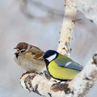 Горланить буду о весне! :: Сергей Адигамов