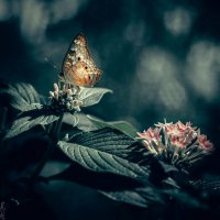 Butterfly :: Vic Noon