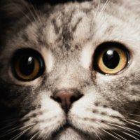 Любопытная кошка :: Юлия Михайлычева