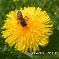 Bee :: Валентина Беккер