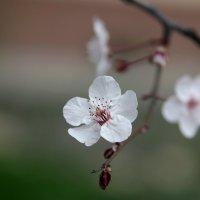 Весна.... :: Виолетта