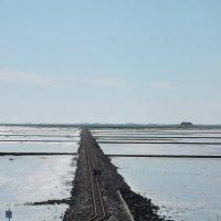 Германия.Железнодорожный путь появляется,как уходит моря.И ведет к островам. :: Екатерина Кононенко