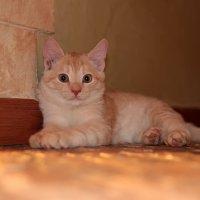 Просто котёнок :: Владимир Холодов