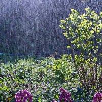 И дождь, и солнце :: Виктор Вуколов