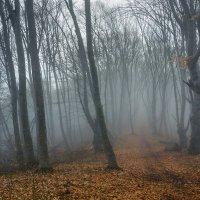 Весенний туман :: Юрий Шевченко