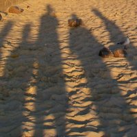 Тени на песке :: Галина Pavel