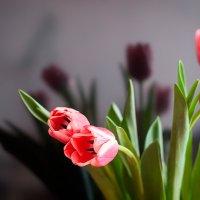 Тюльпаны :: Виктория Мусина