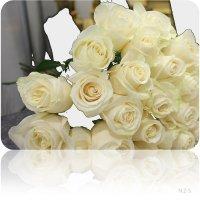 открытка с белыми розами :: Наталья Золотых-Сибирская