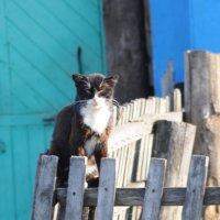 Охранный кот :: Антон Бояркеев