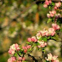 Весна :: Анна Гуйван
