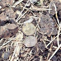Откопали монетки :: Juliya Fokina