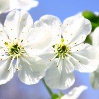 Весенний привет для всех фотографов!!! :: Людмила Ермоленко
