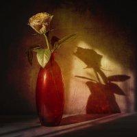 Натюрморт с розой :: Evgeny Kornienko