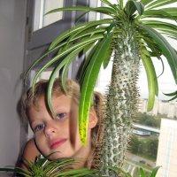 Любимый кактус. :: Нина