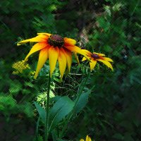 Цветок  в  лесной  чаще... :: Игорь Пляскин