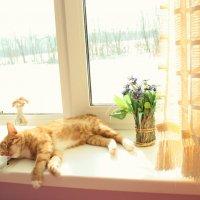 Сладкий сон :: Nastya IVA