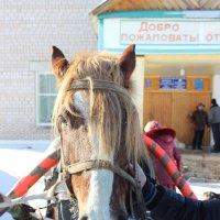 Деревенская лошадка :: Валерий Скобкарёв