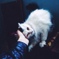 cold :: Рауф Исмаилов