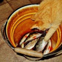 Ловись, ловись рыбка большая и маленькая! :: Ольга Кривых