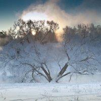 Дерево :: Артем Павлов