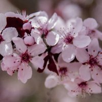 Весна :: susanna vasershtein