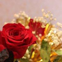 Розы :: Надежда Молчанова