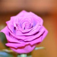роза :: Андрей Канунников