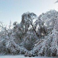 зима в Москве :: Елена Познокос