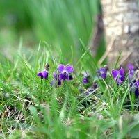 Весна :: Александр Аль-А