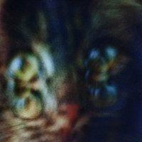 Полуночный кот :: Цветков Виктор Васильевич