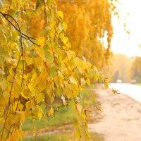 Осень. :: Yuliya Arhipova