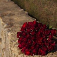 Розы :: Наталья Краснюк