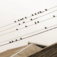 Птички :: Татьяна Жуковская