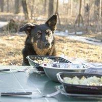 В ожидании мяса(шашлыка) :: Сергей