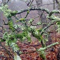 лесные зарисовки  мобильное фото :: valeriy g_g