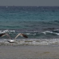 море и чайка :: Boris V. T.