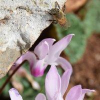 цветочек в горах :: Boris V. T.