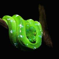 Snake :: Evgeniy Grishin