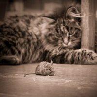 Кошки-мышки :: Юлия Ковальчук