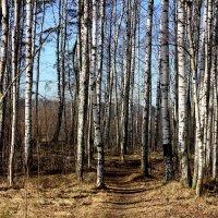 Тропинка в лесу :: Денис Матвеев