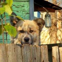 Привет Байкал! :: Владимир Шошин