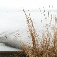 Туман зимой. :: Alexander Antonov