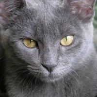 cat's eyes. :: Дарья Скиба