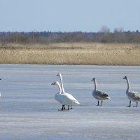 Весна на Лиепайском озере (1) :: Сергей Садовничий