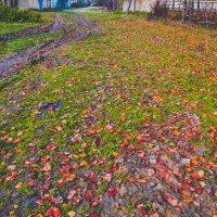 Oсенние листья :: Mail Mamedov