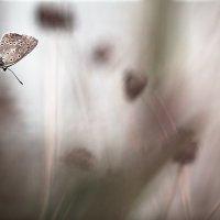 Бабочка :: Маруся Михайлова