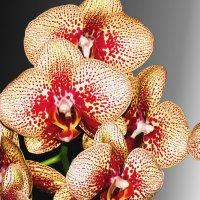 Фестиваль орхидей :: Наталья Лакомова